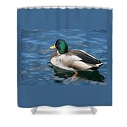 Green Headed Mallard Duck Shower Curtain