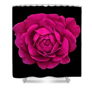 Dramatic Hot Pink Rose Portrait Shower Curtain