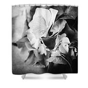 Dramatic Hydrangea In Black And White Shower Curtain