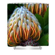 Dramatic Protea Flower Shower Curtain