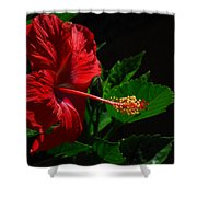 Dramatic Red Hibiscus Shower Curtain