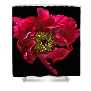 Dramatic Red Peony Flower Shower Curtain