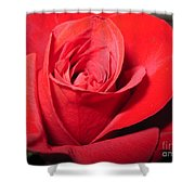 Dramatic Red Rose  Shower Curtain