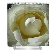 Dramatic White Rose 2 Shower Curtain