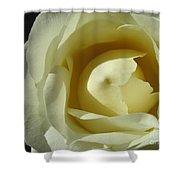 Dramatic White Rose 3 Shower Curtain