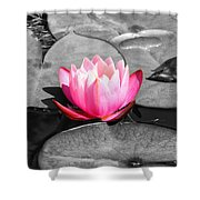Dream Lily Shower Curtain by Mariola Bitner