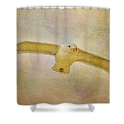 Dream World Seagull Shower Curtain