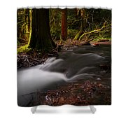 Dreaming Forest Shower Curtain
