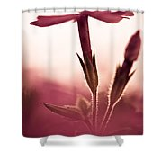 Dreaming In A Setting Sun Shower Curtain