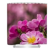 Pink Old Fashioned Rose Shower Curtain