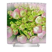 Dreaming Of Pink Hydrangeas Shower Curtain