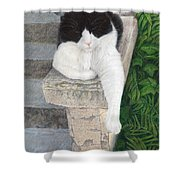 Dreaming Of Stone Lions Shower Curtain