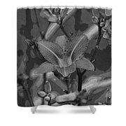 Dreams In Black And White Shower Curtain