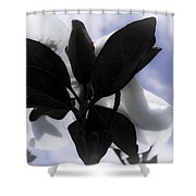 Dreams In The Sky Shower Curtain