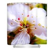 Dreamy Cherry Blossom Shower Curtain