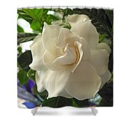 Dreamy Creamy Gardenia Shower Curtain
