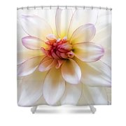 Dreamy Dahlia Shower Curtain