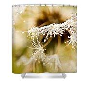 Dreamy Dandelion Shower Curtain