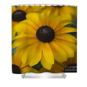 Dreamy Rudbeckia Squared Shower Curtain