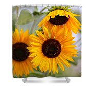Dreamy Sunflower Day Shower Curtain