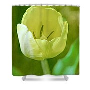 Dreamy Tulip Shower Curtain