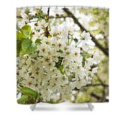 Dreamy White Cherry Blossoms - Impressions Of Spring Shower Curtain