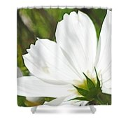 Dreamy White Cosmos Shower Curtain