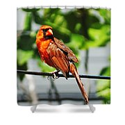 Dressed In Red Shower Curtain