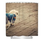 Dressed Up Dog Shower Curtain