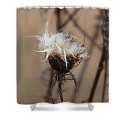 Dried Milk Thistle  Shower Curtain