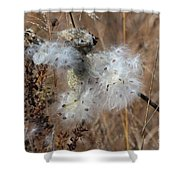 Dried Milk Weed  Shower Curtain