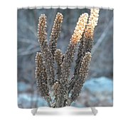 Dried Plant Shower Curtain