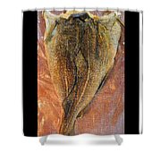 Dried Salted Codfish Back Shower Curtain