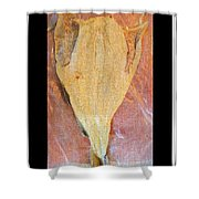 Dried Salted Codfish Front Shower Curtain