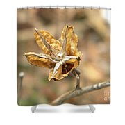 Dried Seed Shower Curtain