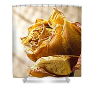 Dried Yellow Rose Shower Curtain
