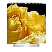 Dried Yellow Rose II Shower Curtain