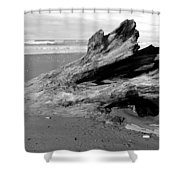 Drifter I Shower Curtain