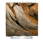 Driftwood 2 Shower Curtain by Adam Romanowicz