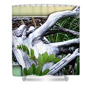 Driftwood Escape Shower Curtain