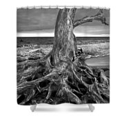 Driftwood On Jekyll Island Black And White Shower Curtain