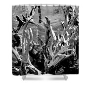 Driftwood On Lost Lake Shower Curtain by Michelle Calkins
