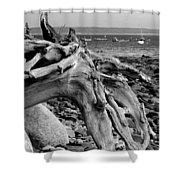 Driftwood On Rocky Beach Shower Curtain