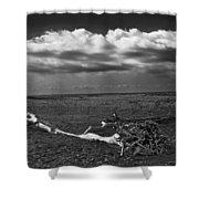 Driftwood On The Beach At Whitefish Point Shower Curtain