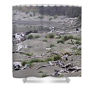 Driftwood On The Beach Shower Curtain