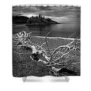 Driftwood On The Shore Near Wawa Ontario Canada Shower Curtain