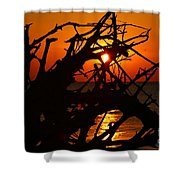 Driftwood Tangle Shower Curtain