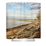 Driftwood On Shore Shower Curtain