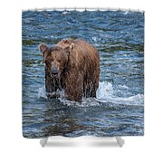 Dripping Grizzly Shower Curtain