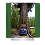 Drive Through Redwood Tree Shower Curtain